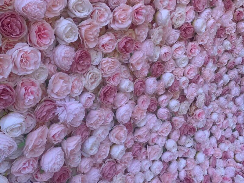 Pink Flower Wall for hire in chester
